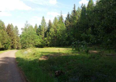 Lesní cesta Vranovská - loučka s pomněnkami