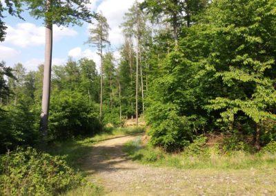 Lesní cesta Vranovská - odbočka červené turistické trasy směr Nový Hrad