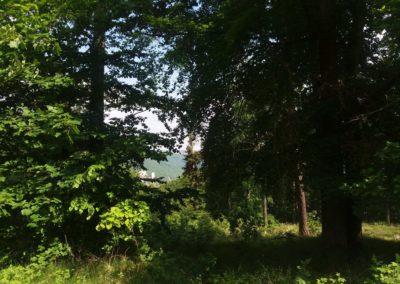 Lesní cesta Vranovská - výhled na Adamov