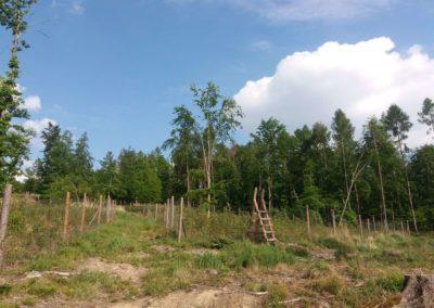 Lesní cesta Vranovská - výsadba stromů