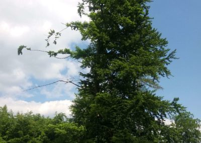 Lesní cesta Vranovská - zajímavě orientovaný strom