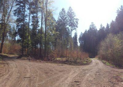 Lesní cesta Zrcadlová - křížení s červenou turistickou trasou