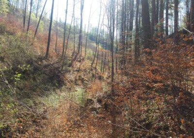 Lesní cesta Zrcadlová - místo vývěru V Zrcadlech
