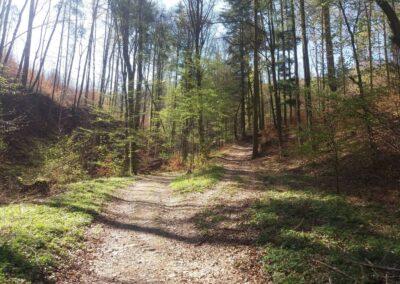 Lesní cesta Zrcadlová - odbočka doprava směr lesní cesta Klepačovská
