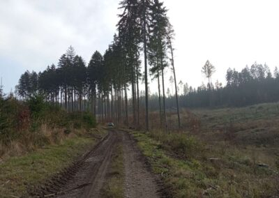 Lesní cesta Zrcadlová - pokácený les u silnice Olomučany - Rudice