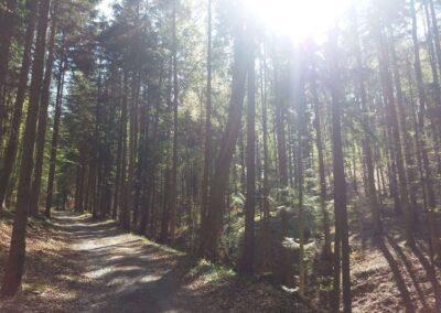 Lesní cesta Zrcadlová - příjemný úsek od druhého křížku