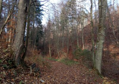 Lesní cesta Zrcadlová - svatý obrázek (v mapě bod 4)