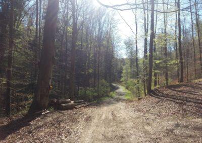 Lesní cesta Zrcadlová - svatý obrázek (v mapě bod 5)