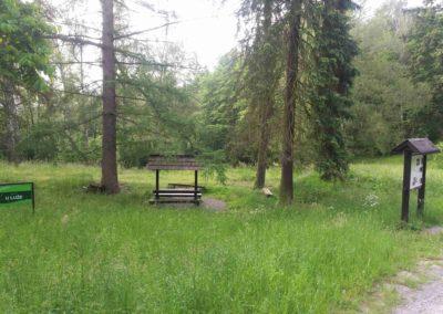 Lesní palouk U Luže