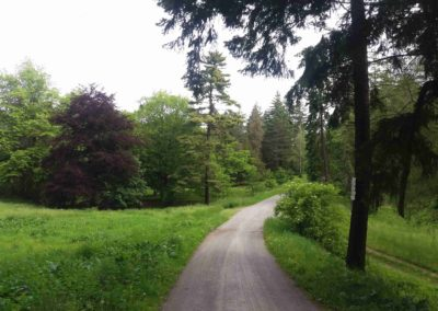 Pohled na lesní palouk U Luže z jihu