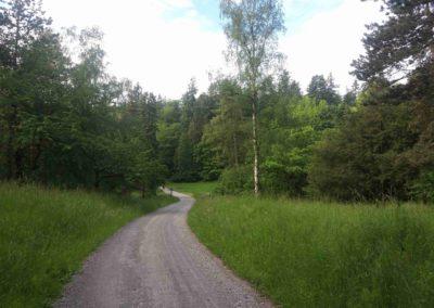 Pohled na lesní palouk U Luže ze severu