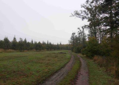 Modřínový sad nedaleko lesní cesty Červené