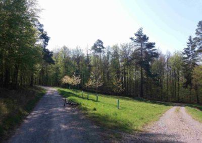 Palouk na konci lesní cesty Dřínová