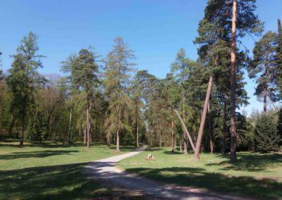 Palouk u arboreta Řícmanice