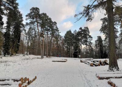 Palouk nedaleko arboreta Řícmanice v zimě