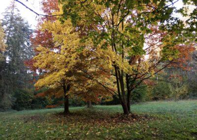 Palouk U Luže na podzim