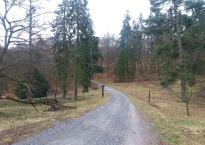 Lesní cesta Vojanka - palouk U Luže před příchodem jara