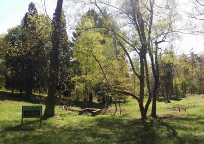 Lesní cesta Doubská - palouk U Srnce