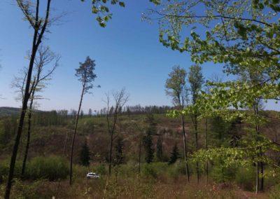 Pohled na lesní cestu Brněnka ze severovýchodu nedaleko PR Žilůvky