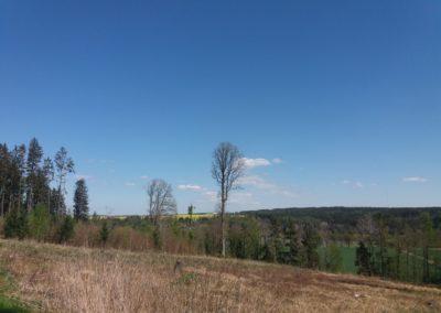 Pohled na rybník Budkovan v Rakoveckém údolí