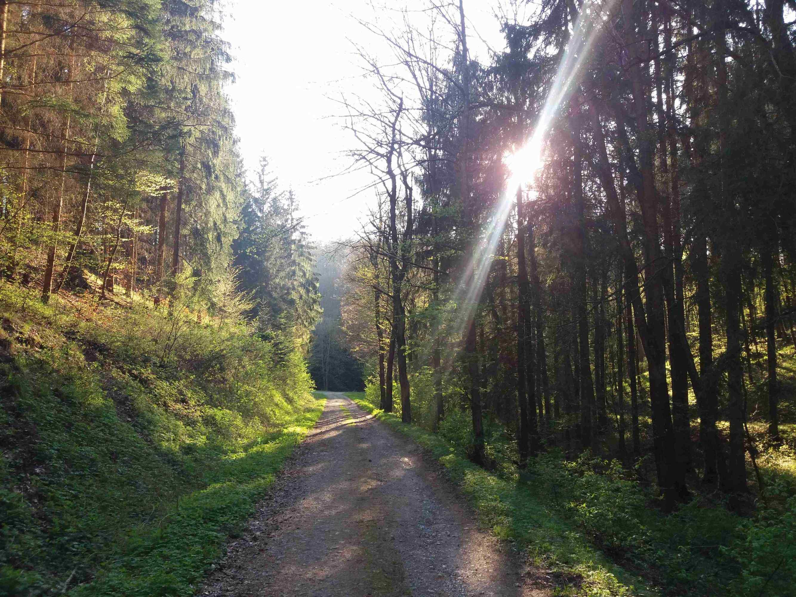 Rossenauerova cesta