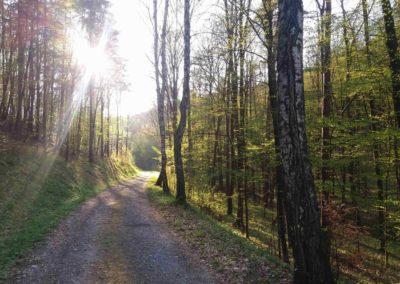 Rosenauerova cesta