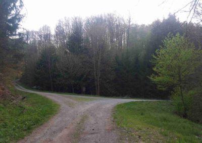 Lesní cesta Rosenauerova - doprava modrá turistická trasa a pokračování cesty, doleva lesní cesta Vypálenka k arboretu