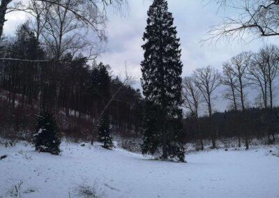 Rosenauerova cesta - pohled na palouk z východu od silnice na Babice v zimě