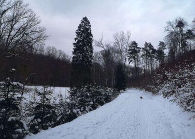 Východní začátek / konec lesní cesty Rosenauerovy v zimě u palouku