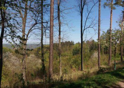 Výhledy z lesní cesty Červená po kácení lesa