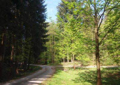 Lesní cesta Schindlerova - začátek / konec u palouku při lesní cestě Proklest