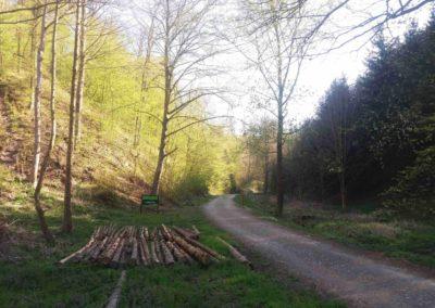 Začátek lesní cesty Hradská v údolí Svitavy