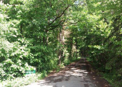 Začátek lesní cesty Proklest nedaleko Bukoviny