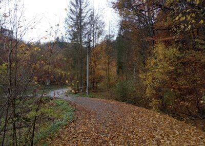Začátek Wiehlova údolí u silnice Olomučany - Josefov