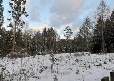 Zimní arboretum Řícmanice
